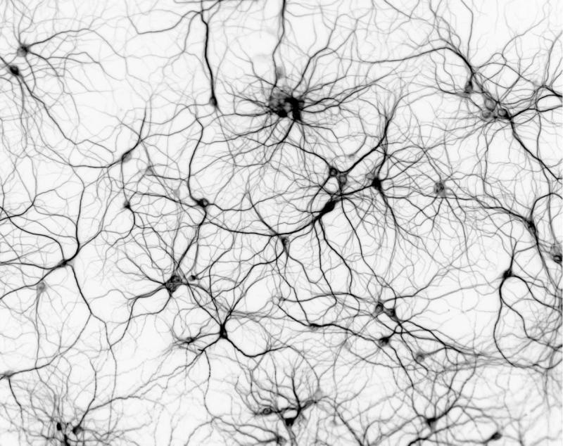 neuron-network_invert.jpg